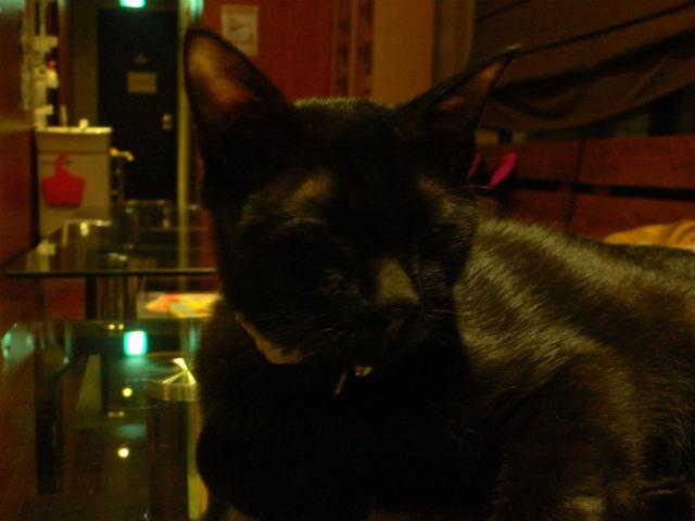 猫写真 007