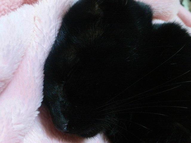 猫写真 004