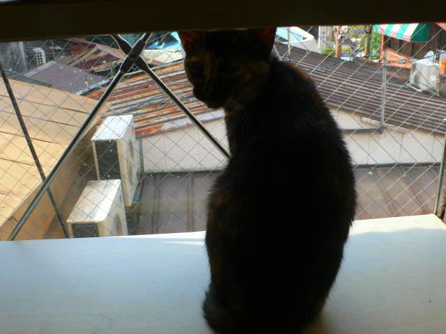猫写真 028