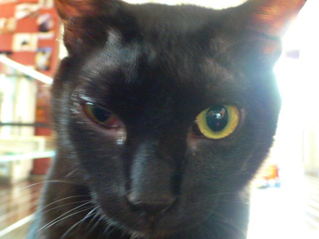 猫写真 032