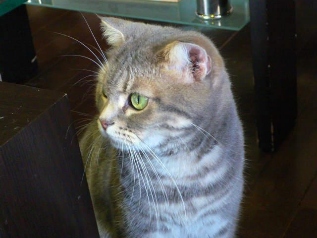 猫写真 037
