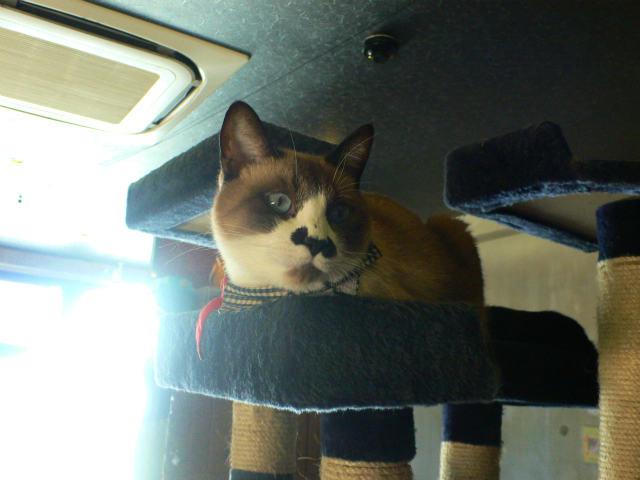 猫写真 003