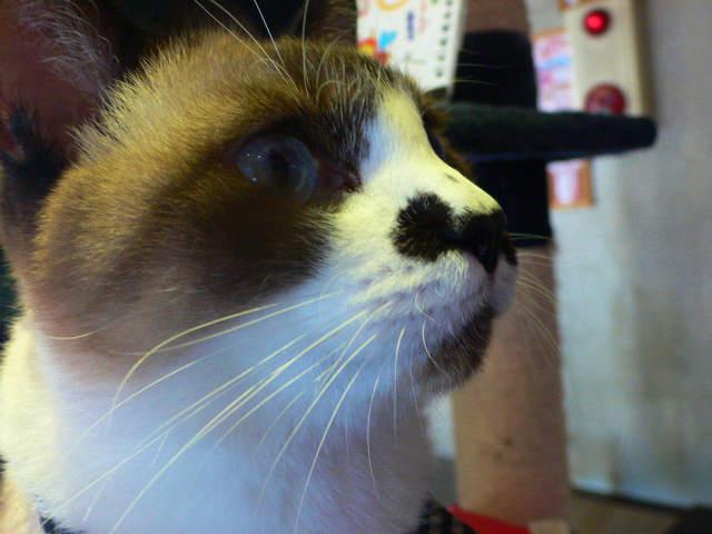 猫写真 017