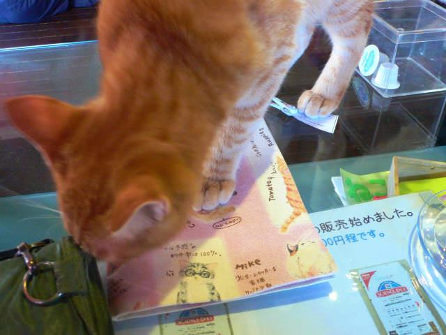 猫写真 015