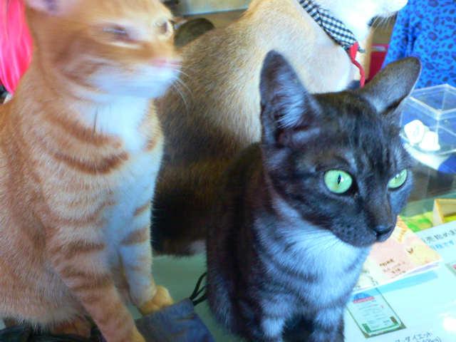 猫写真 019