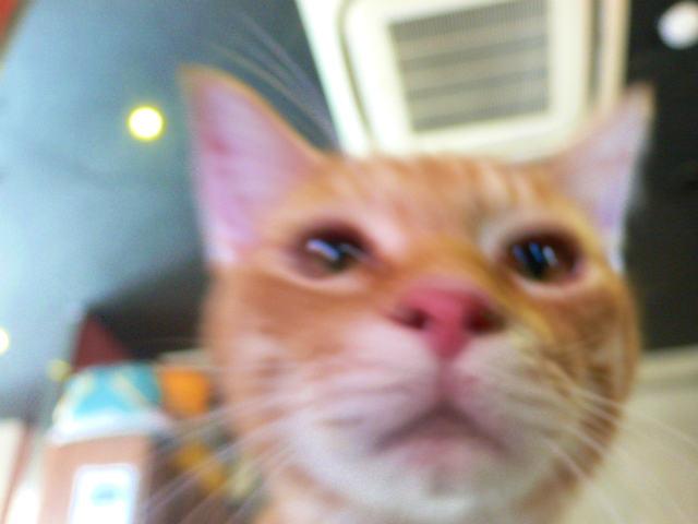 猫写真 016