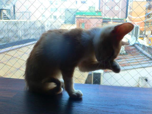 猫写真 034