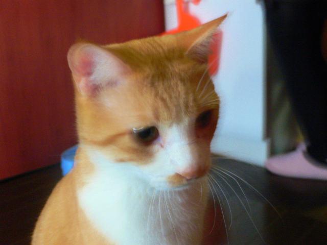 猫写真 027