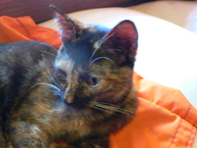 猫写真 024