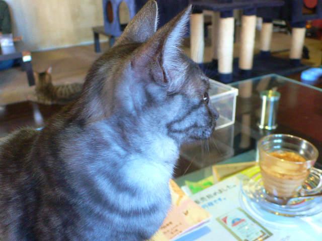 猫写真 023