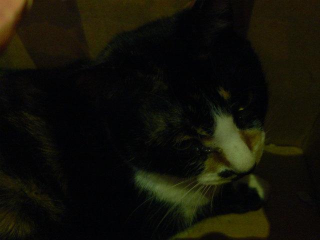 猫写真 029
