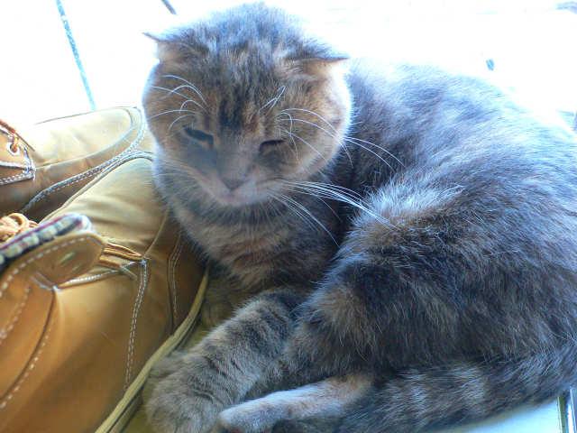 猫写真 041