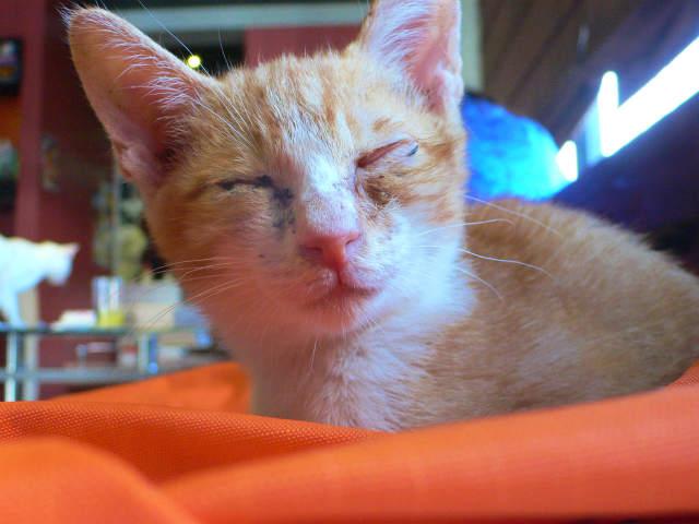 猫写真 039