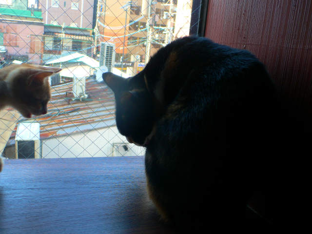 猫写真 036