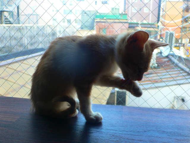 猫写真 035
