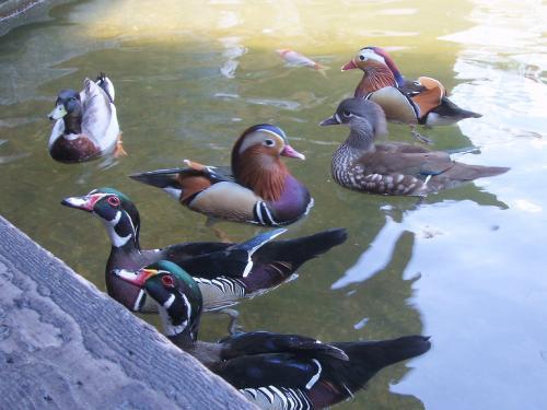 20090412水鳥達