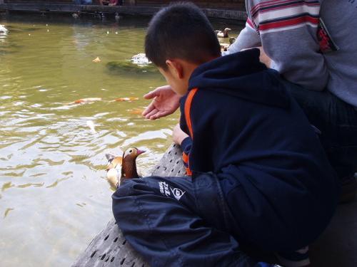 20090412水鳥に餌をあげる人たち