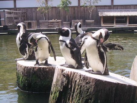 20090412ペンギン