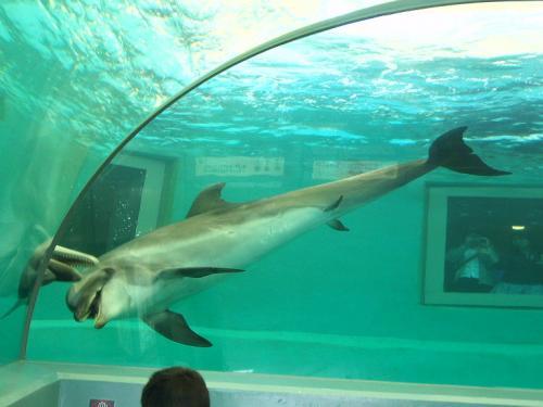 20090429腹びれのあるイルカさん