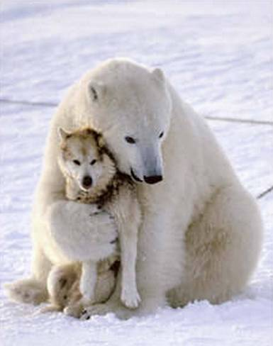 polar-bear-funny-dog-death-hug.jpg