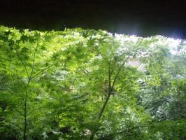 屋根からの光