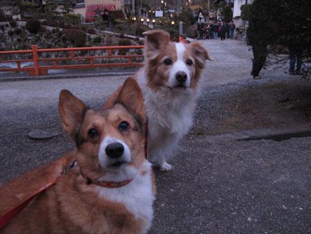 hatumoude01017.jpg
