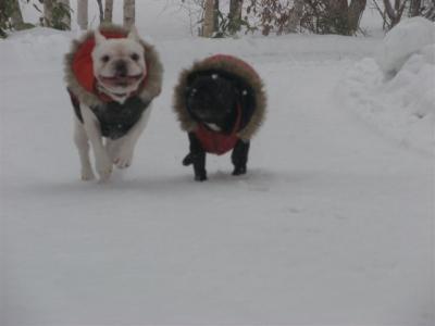 1月9日岩ちゃん&小梅走る笑顔