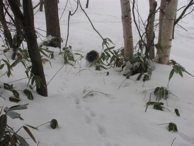 1月9日小梅木の中をついてくる1