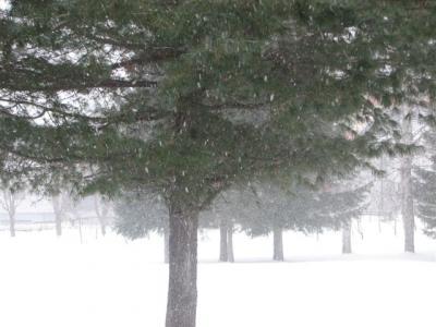 1月9日雪雪