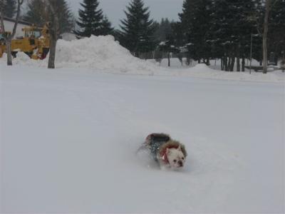 1月10日岩之介雪の中を爆走