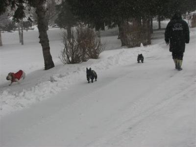 1月13日パパさんと散歩2