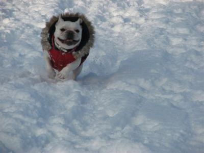 1月14日姫笑顔で走る