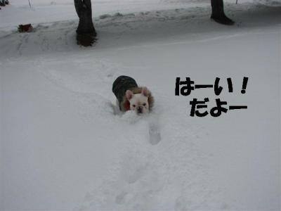1月22日岩之介の勇敢な雪へのダッシュ