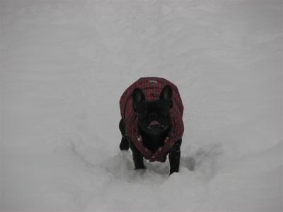 1月22日乙女走りながらペロ