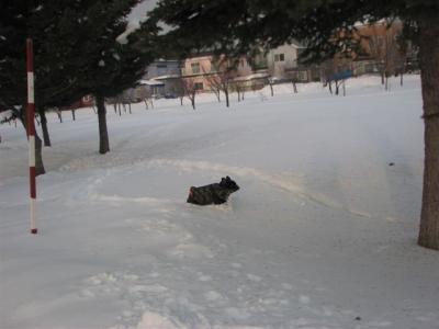 1月30日小梅木を見つけて走る