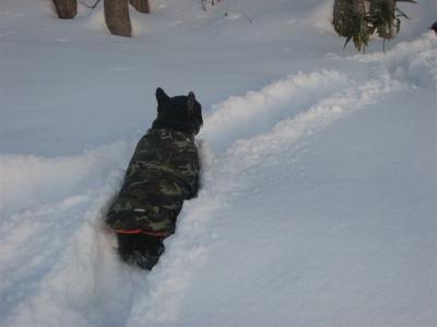 1月31日小梅雪の中を走って行く