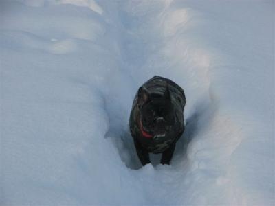 1月31日雪の中を走る小梅