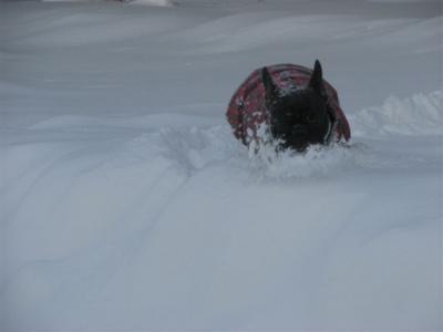 1月31日雪の中を漕いで来る乙女
