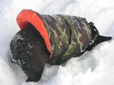 2月1日小梅雪の中に顔