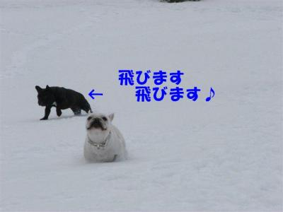 3月7日小梅飛びます。