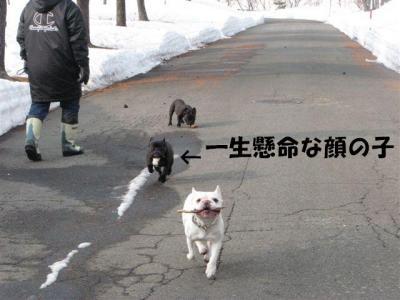 3月16日一生懸命走る子小梅