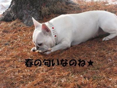 3月16日姫春の匂いを嗅ぐ