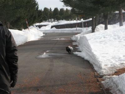3月16日雪が溶けた道路
