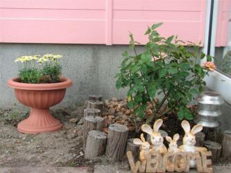 6月30日バラを植えた。