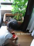 2009.6.29 tomatosyu-kaku tate