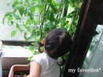2009.6.29 tomatosyu-kaku y