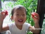 2009.6.29 tomatosyu-kaku y egao