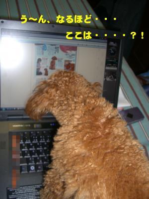 CIMG1844_convert_20090221183054.jpg