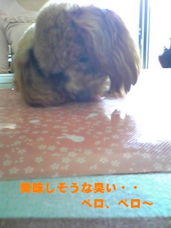 SBSH0085_convert_20090305195423.jpg