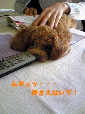 SBSH0088_convert_20090305202742.jpg
